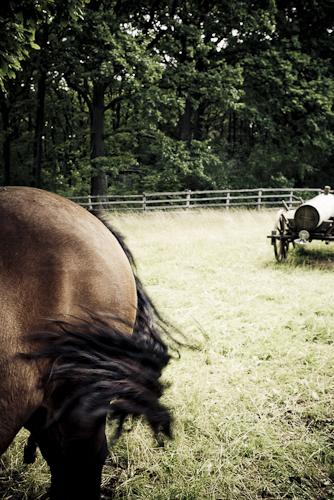 Pferde stehlen bei ISO 100 mit f/2,8