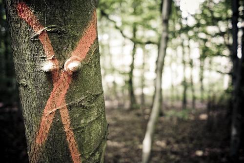 Das X im Walde - ISO 160 f/2,8
