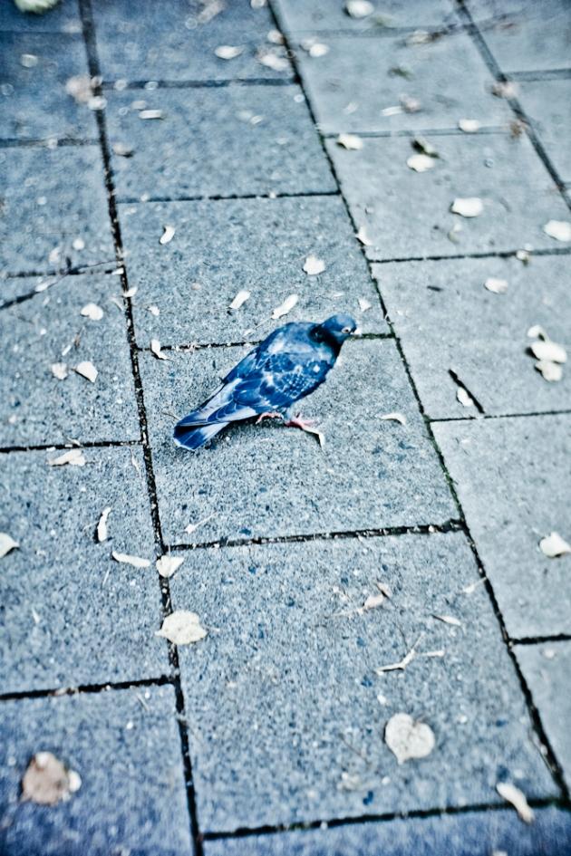 Der Taube ist nichts weiter passiert