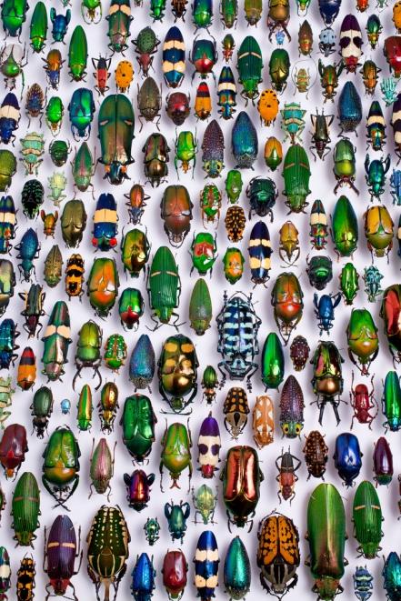 Bugs © Scott Lewis